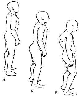 Психология тела: биоэнергетический анализ тела