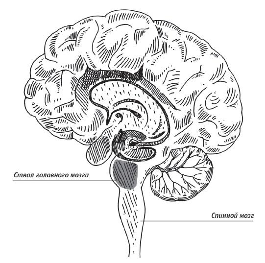 Скрытые возможности нашего мозга