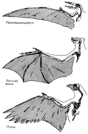 Как можно сделать крылья как у летучей мыши чтобы летать