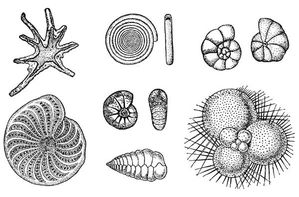 К какому виду относится инфузориятуфелька корненожки