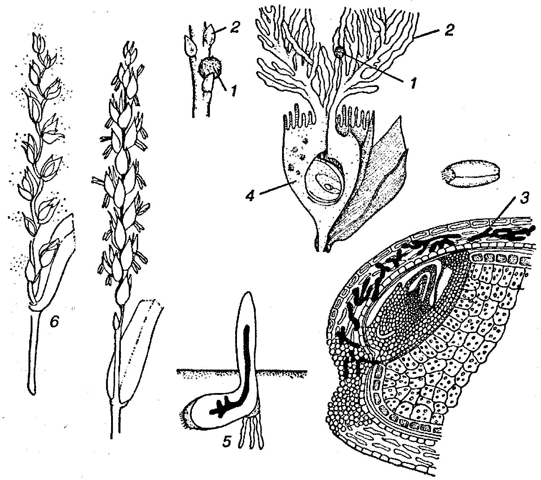 коврики резиновые для skoda octavia