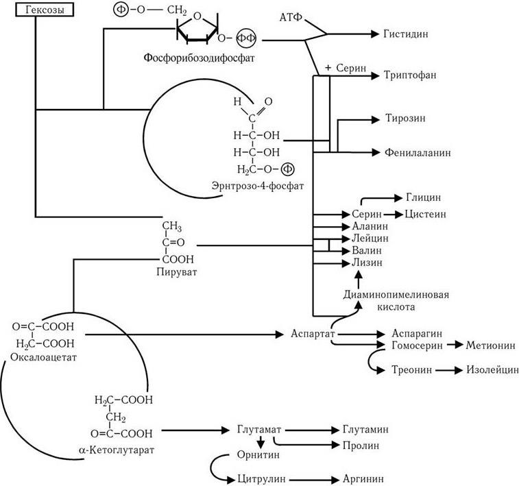 Медицинская микробиология, иммунология и вирусология