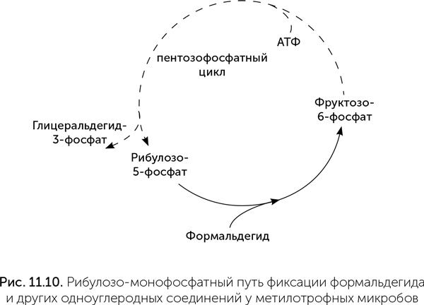 Происхождение жизни