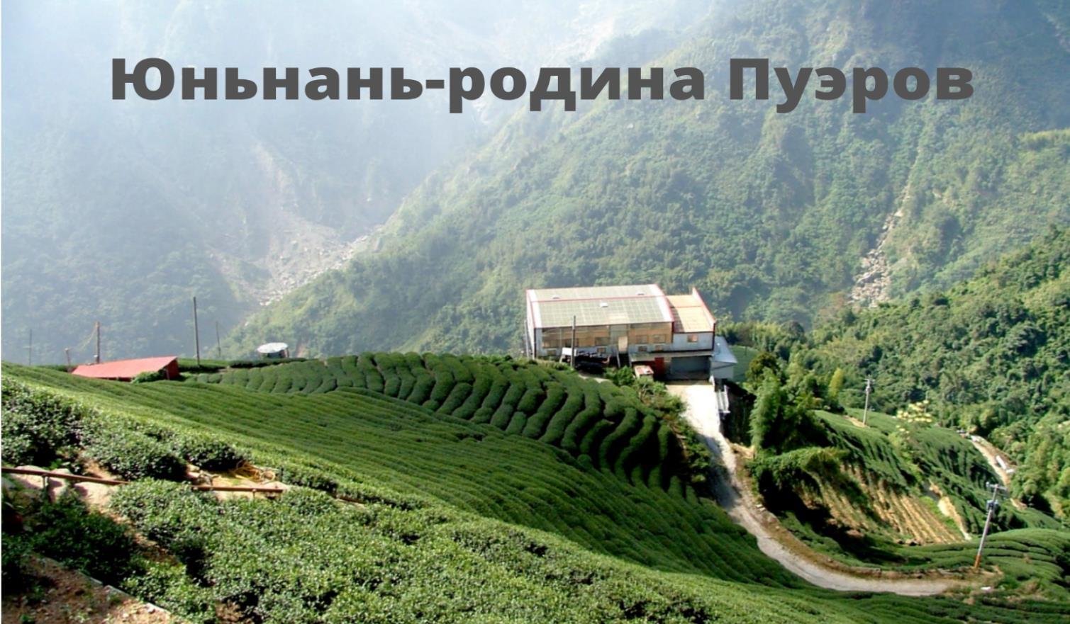 Секреты китайского чая