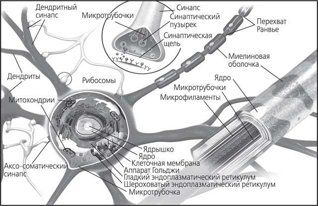 Мозг. Как он устроен и что с ним делать
