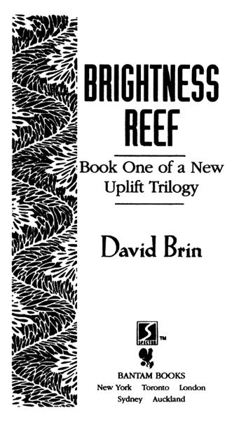 Brightness Reef
