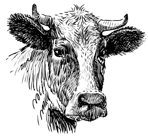 Секретная жизнь коров. Истории о животных, которые не так глупы, как нам кажется