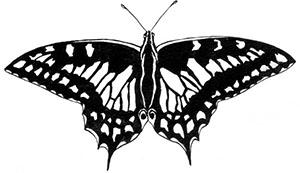 Комната бабочек