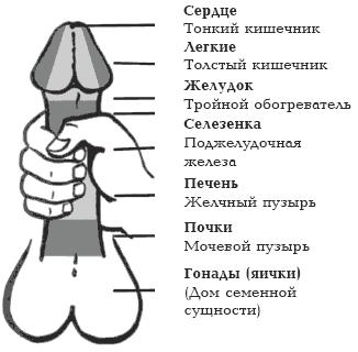 нормальный размер половой член Серпухов