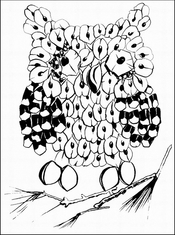 Высоко на дереве сидит умная сова ее