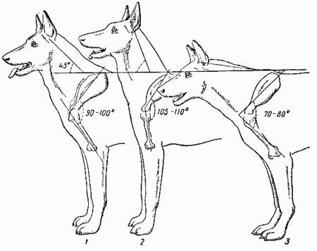 К характерным недостаткам строения плеча относятся (рис. 53): - прямое...