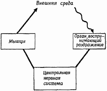 Фиг 1 схема организации простейшего