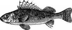 Любительское рыболовство
