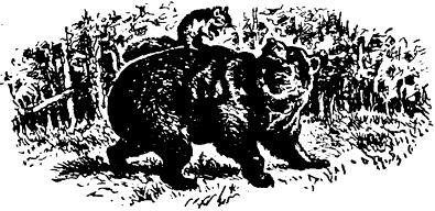Как медведь и бурундук дружить перестали