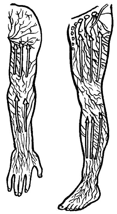 Воздействие на кровеносную и лимфатическую системы.  Благодаря самомассажу происходит более быстрый отток венозной...