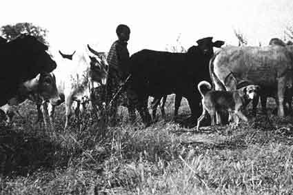 Собаки. Новый взгляд на происхождение, поведение и эволюцию собак