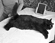 ВНИМАНИЕ! Что опасно для домашних кошек - ZooForum