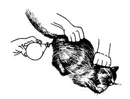 РОДЫ кошки.