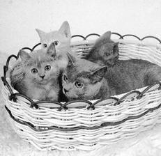 У котенка (2 месяца) понос и рвота.