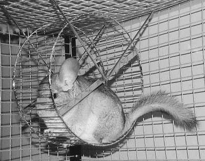 Лечение декоративных кроликов