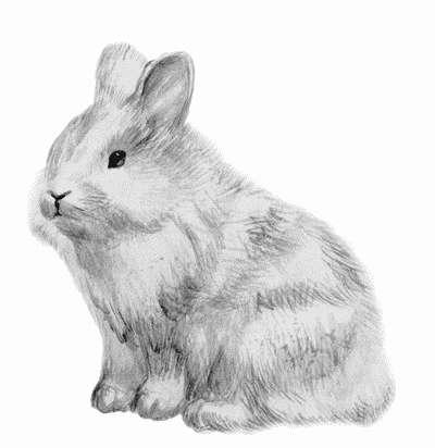 Кролик породы львиная головка