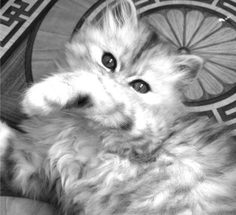 Глава 4. Как лечить котёнка. Инфекция. Симптомы. Лечение ...